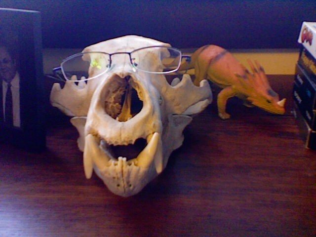 Bearskull and glasses
